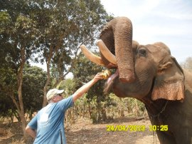 Ron feeding bananas to an elephant